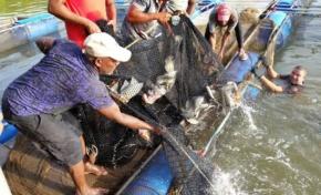 Asociación de pescadores de Boba inicia su primera venta de tilapia luego del financiamiento del gobierno